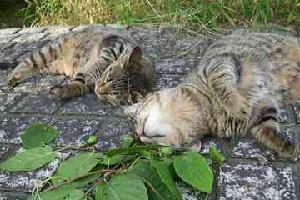 ネコにマタタビ_www.d2.dion.ne.jp